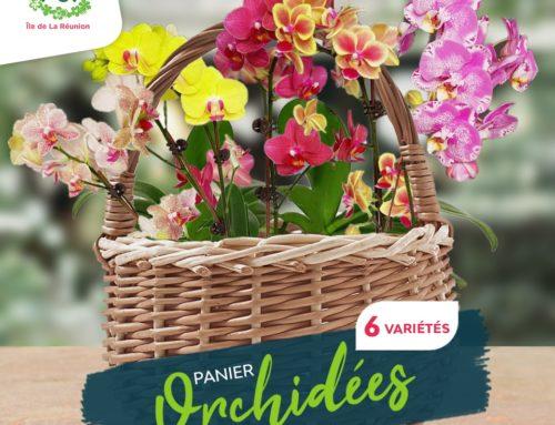 Fiches conseil – Orchidées toutes couleurs