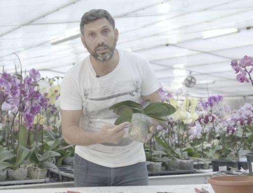 Quel engrais pour mon orchidée ?
