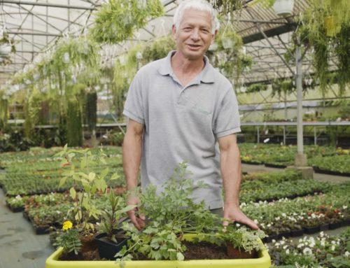 Créer une jardinière de plantes Aromatiques